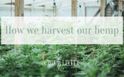 How we Harvest our Hemp
